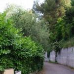 Un camin dessouta lou vilage