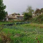 Un ouòrt dins lou vilage